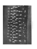 Sayfa 20