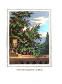 Sayfa 562