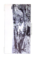Sayfa 284